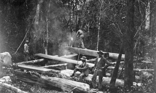 A pitsaw in the Knysna Forests, possibly early 20th-Century