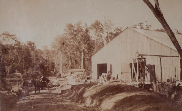 (Thought to be) Parkes sawmill, Knysna Forest, late 19th Century