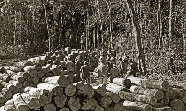 Knysna forest, indigenous timber, auction, 1950s