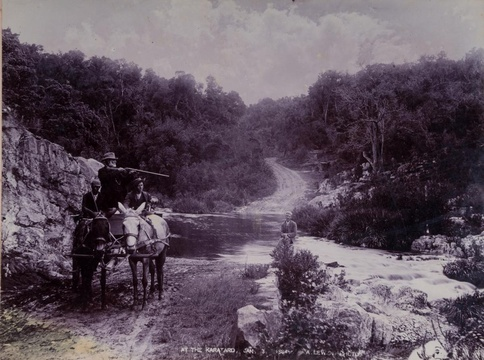 Knysna forest, late 1800s, historic image