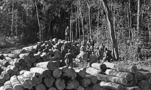 Government timber auction in the Knysna Forests. 1950s