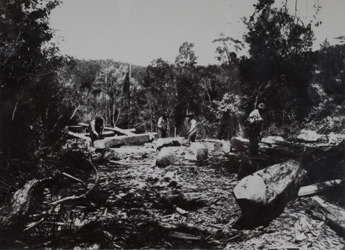 Knysna forest, woodcutters, historic images