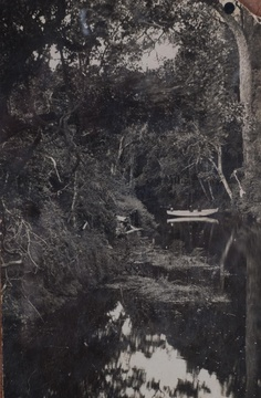 Rowing on a river in the Knysna Forest - Possibly Noetzie River. Historic images, Knysna