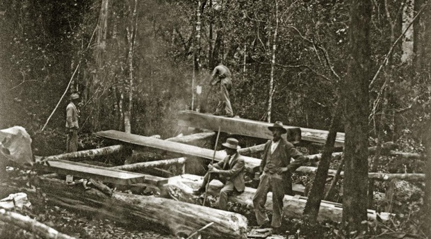 Woodcutters work a pit-saw in the Knysna Forests. Late 1800s