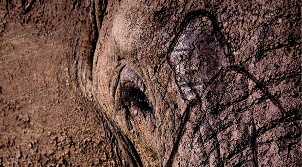 Gareth Patterson, Beyond the Secret Elephants, Knysna Elephants, Knysna Forest, Otang