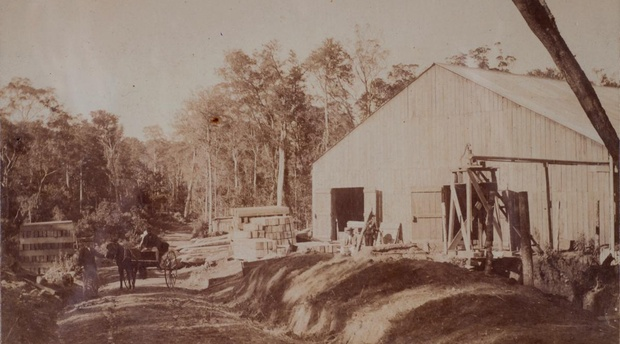 Forest sawmill - perhaps Parkes of Knysna. Late 19th Century