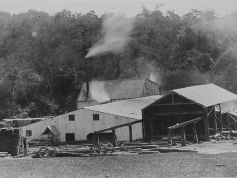 Thesen's saw mill, Brackenhill, Knysna forests